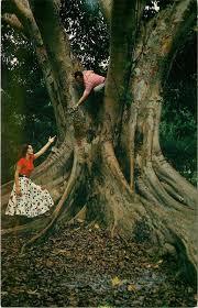 fort lauderdale fl flamingo groves botanic garden 1950s couple climb fig tree hippostcard