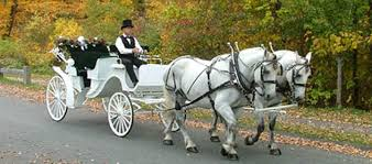 Image result for horse and cart hire