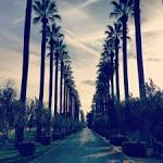 Trees at Stockdale Country Club Bakersfield, CA. | Golf courses ...