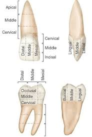 middle island dental works 44 best odontopediatria images on pinterest teeth dental and