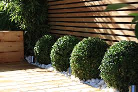 Round scrubs against contrasting linear fence   Gardening ...