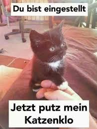 Translate Anybody All Gods Creatures Lustige Katzen Katzen