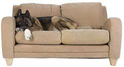 How to Keep Dogs f Furniture for FREE – Top Dog Tips