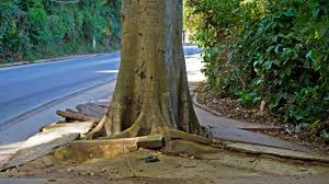 Concrete Cutting: Treating Tree Roots Under Concrete Footpaths