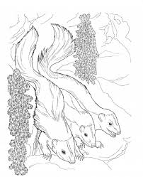 Adult ~ Printable Skunk Coloring Pages For Kids Pictures skunk ...
