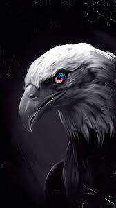 Only here you can find out any picture of black eagle in any size you like. Black Eagle Wallpaper