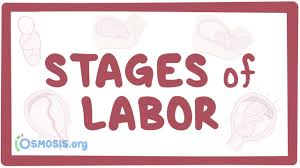 Phases Of Labor Chart Stages Of Labor Physiology