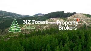 Birch North Forest, Weber, New Zealand - YouTube