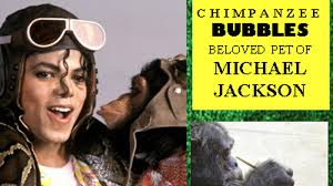 Image result for Michael Jackson's chimpanzee Bubbles star of Miami art show