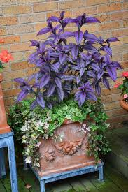 Small Picture 2230 best Container Plants SpringSummer images on Pinterest