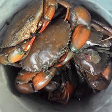 Online Seafood Market - Home