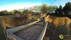 Deer Feed Considerations For Winter Deer Feeding Farming