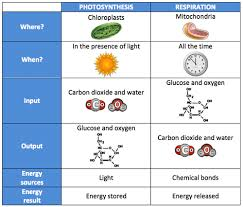 Complete The Chart For The Stages Of Cellular Respiration Chart Comparing Photosynthesis To Respiration This Image Is
