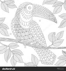 Small Picture Toucan Adult Antistress Coloring Page Black And White Hand Drawn