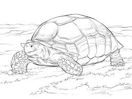 Small Picture Sulcata Tortoise Coloring page schildpadden Pinterest