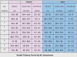 Morkie Weight Chart Goldenacresdogs Com