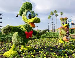 disney flower and garden. Kermit And Miss Piggy Topiaries At Epcot International Flower \u0026 Garden Festival Disney W