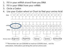 48 Bright Codon Chart For Trna