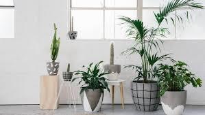 fox and romona pots brisbane office plants