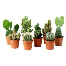 Cactaceae Potted Plant Ikea Cactus кактус Cactus Plant Pots