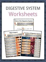 The Digestive System Facts Worksheets Components Process