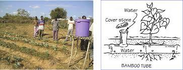 Trickle Irrigation Systems Design