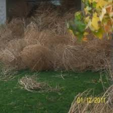 Small Picture Tumbleweeds HubPages