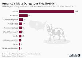 Pitbull Dog Years Chart Americas Most Dangerous Dog Breeds Infographic
