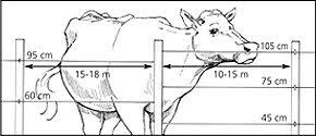 barbed wire fence cattle. For Dairy And Beef Cattle. A 2 Wire Fence Barbed Cattle