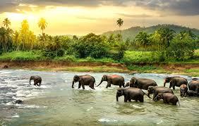 Beste Reisezeit für Sri Lanka - Infos zum Klima und den Monsunen