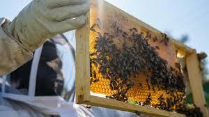 Bee Designs Malta Il Detroit Hives Mountainfilm