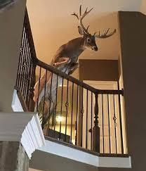 7 interesting deer head mounts