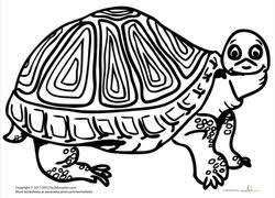 Small Picture Turtle Coloring Pages Printables Educationcom
