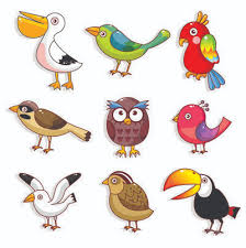 Birds Chart For Kindergarten