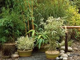 Container Garden Ideas For Winter