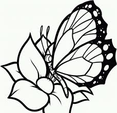 Butterfly And Flower Coloring Pages For Adults With Butterfly And