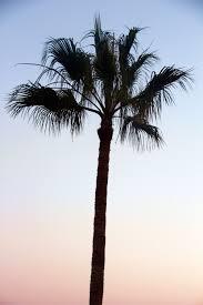 palm trees tumblr vertical. Love Beautiful Summer Boho Fresh Lovely Nature Palm Tree Gypsy Vertical Tumblr Photographers Phototgraphy Litalphotog Lakadaizical Trees K