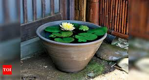 make a pond in a garden pot times of