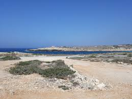 Tartaruga Rossa Lampedusa Italië Fotos En Reviews Tripadvisor