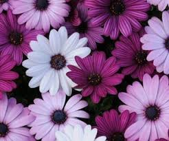 Wallpaper flower Wallpaper 53627 Flowers Wallpaper And Purple Image We Heart It 380 Images About Wallpapersflowers On We Heart It See More About
