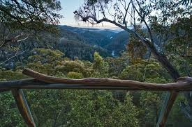 Home  Treehouse Accommodation Stay In A Treehouse Treehouses To Treehouse Accommodation Nsw