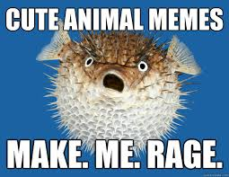 Cute animal memes Make. Me. Rage. - Pessimistic Porcupinefish ... via Relatably.com
