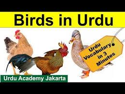 Birds Chart With Names In English Urdu Vocabulary Through English Name Of Birds In Urdu