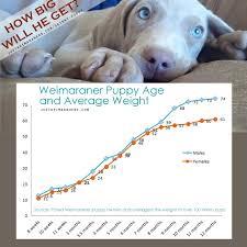 Skinny Puppy Justweimaraners