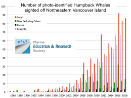 The Tale Of The Humpback Whale Wildcoast