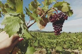 salon des vignerons indépendants paris