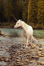 384 best images about Unicorns on Pinterest