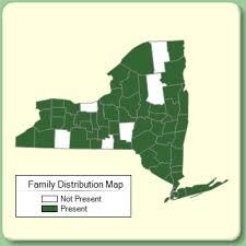Rhamnaceae - Family Page - NYFA: New York Flora Atlas - NYFA ...