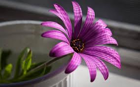 1920x1200 flowers beautiful purple flowers wallpapers desktop phone tablet