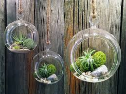 Plush Diy Air Plant Terrarium In Diy Air Plant Terrarium in Air Plant